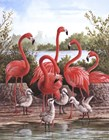 Flamingo 1 by Ron Jenkins art print