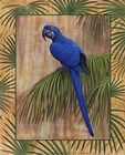 Hyacinth Macaw by Ron Jenkins art print